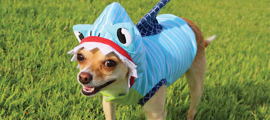 Dog in a shark costume